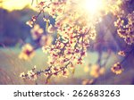 spring blossom background.... | Shutterstock . vector #262683263