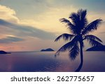 Silhouette of palm tree at...