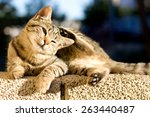 Cute Tabby Kitten Lying On The...