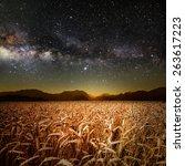 field of grass. meadow wheat... | Shutterstock . vector #263617223
