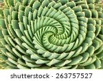 Pattern Of Spiral Aloe  Aloe...