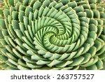 Pattern Of Spiral Aloe  Aloe...