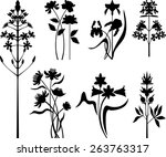plants collection   Shutterstock .eps vector #263763317