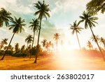 palm plantation on tropical...   Shutterstock . vector #263802017