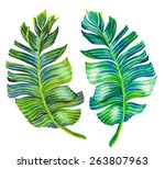 banana palm leaves. single... | Shutterstock . vector #263807963