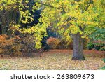 Large Tree And Golden Leaves...