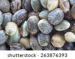 Close View Of Hemp Seeds  Macr...