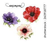 Anemone  Watercolor  Can Be...