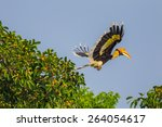 Flying Great Hornbill  Buceros...