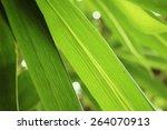 bamboo | Shutterstock . vector #264070913