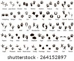 Stock vector set of animal and bird trails with name 264152897