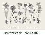 Botany. Set. Vintage flowers. Black and white illustration in the style of engravings. | Shutterstock vector #264154823