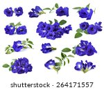 Butterfly Pea Flower On White...