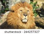lion head | Shutterstock . vector #264257327