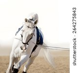 White Horse Portrait Coaching...