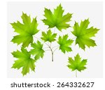 Green Leaf Maple And Maple...