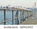 Seagulls Perched Over A Pier...