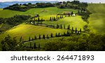 cypress road  natural landscape ... | Shutterstock . vector #264471893