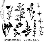 plant collection  | Shutterstock .eps vector #264535373