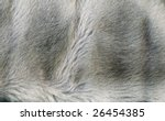 Fragment Of Clothes From Fur...