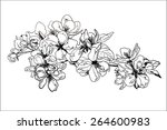 hand drawing apple blossom | Shutterstock .eps vector #264600983