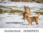 two young wild | Shutterstock . vector #264609653