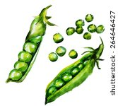 Green Peas Watercolor