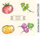 vector watercolor set of... | Shutterstock .eps vector #264701183