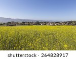 Mustard Flower Spring Meadow I...