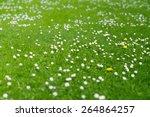 green spring meadow  blooming... | Shutterstock . vector #264864257