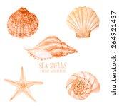 Vector Watercolor Sea Shells....