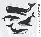Collection Of Different Whales...