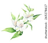 watercolor illustration white... | Shutterstock . vector #265278617
