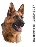 drawing of the dog german... | Shutterstock . vector #265348757