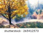 fall colors garden at sunny...   Shutterstock . vector #265412573