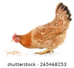a vibrant red hen is pecking... | Shutterstock . vector #265468253