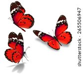 three red butterfly isolated on ... | Shutterstock . vector #265506947