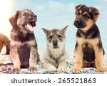 puppies on the beach | Shutterstock . vector #265521863