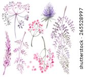 A Set Of Herbs And Flowers Han...