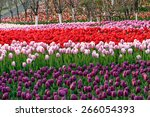 colorful tulips  tulips in... | Shutterstock . vector #266054393
