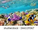 wonderful and beautiful... | Shutterstock . vector #266119367