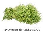 green bush on white background | Shutterstock . vector #266196773