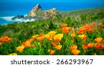 California Poppy Field On The...
