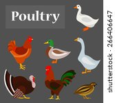 Illustration Of Poultry  Goose...