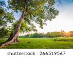 Green Grass Field And Tree In...