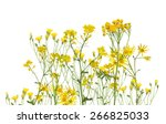 Stock photo group of yellow flowers isolated on white background 266825033