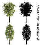3d tree render on white... | Shutterstock . vector #267012407