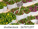 Tulip Flowers From Holland For...