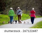 Stock photo dog walkers in the park with many little dogs 267122687