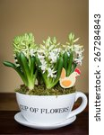 hyacinths in a pot | Shutterstock . vector #267284843